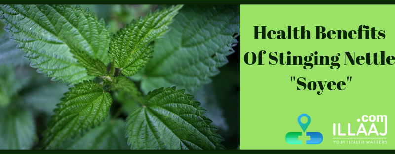 Health Benefits of stinging nettle.